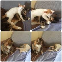 Snuggles? No. Please love me, says Momo!