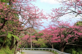 Strolling down Mt. Yaedake