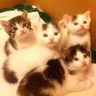 Box of kittens!