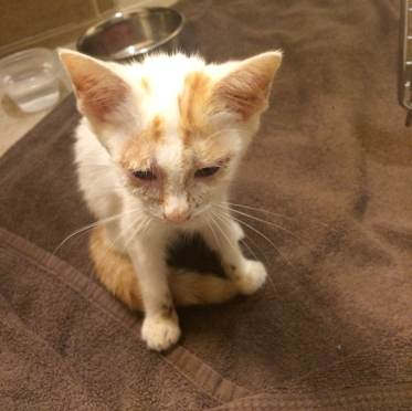 Jack, currently receiving care for eye infections