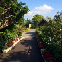 Pathway to the butterfly garden