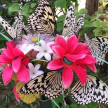 Gorgeous cluster of butterflies