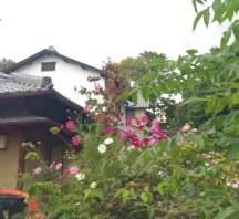 Strolling Nara neighborhoods