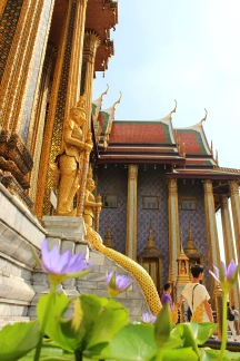 Lotus flowers at Wat Phra Kew