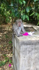 Monkey with his stolen pom-poms
